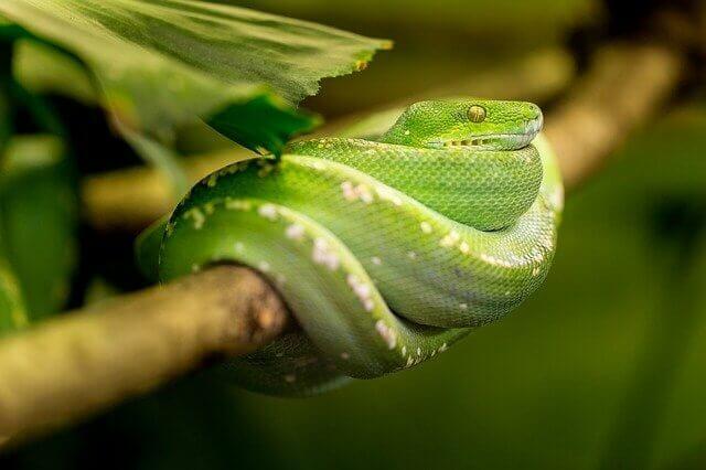 Álomfejtés kígyó jelentése
