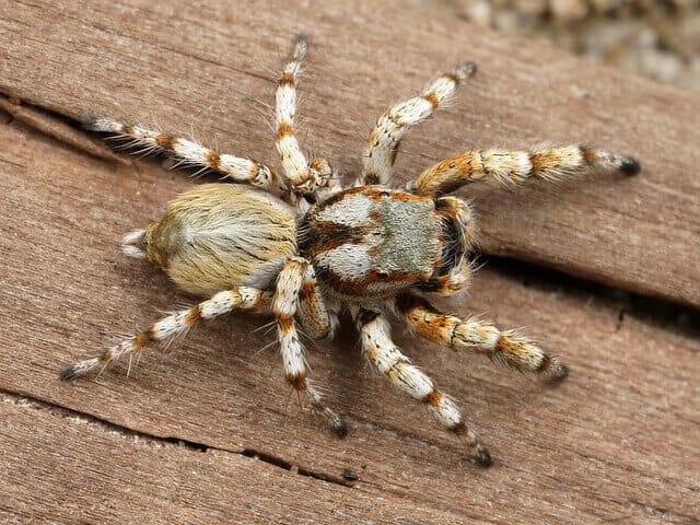 Álomfejtés pók